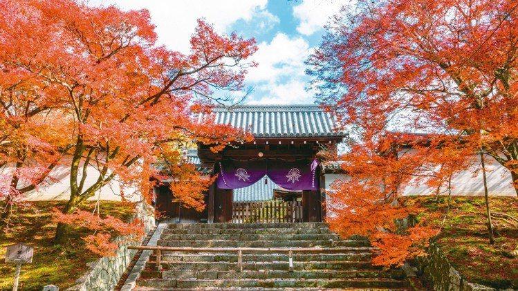 京都曼殊院門跡敕使門紅葉。 圖/梁旅珠提供