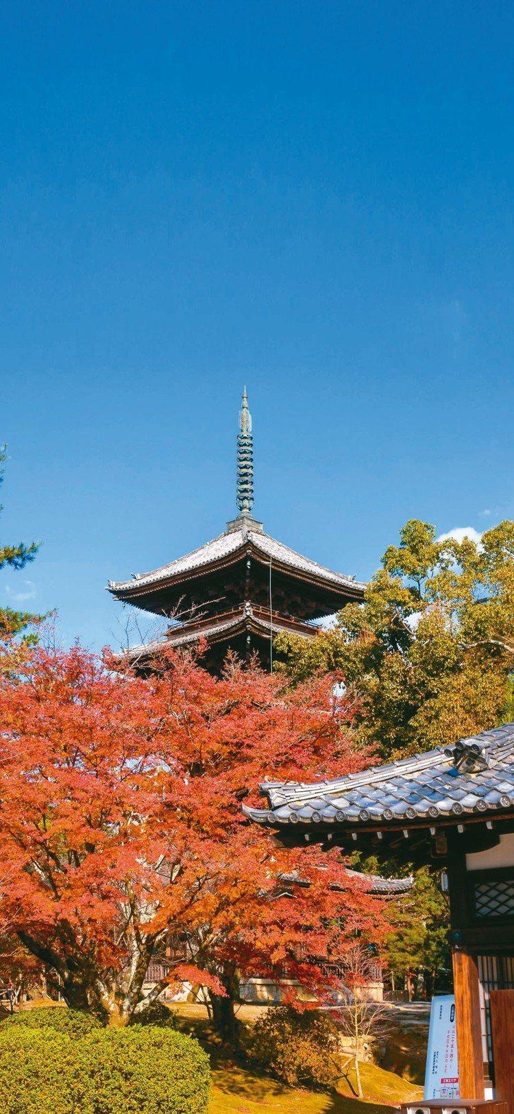 仁和寺境內與國寶金堂及五重塔相互輝映的紅葉光彩耀目。 圖/梁旅珠提供