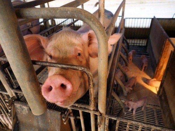 立法院經濟委員會今天初審通過,從中國大陸帶生肉回台最低裁罰1萬元,最高100萬元...