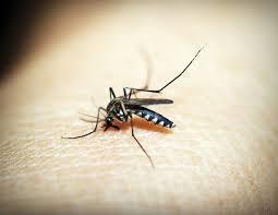 瘧疾是全球性的寄生蟲傳染病,而近2年來,印度打擊瘧疾的表現最為良好。 台灣醒報(...
