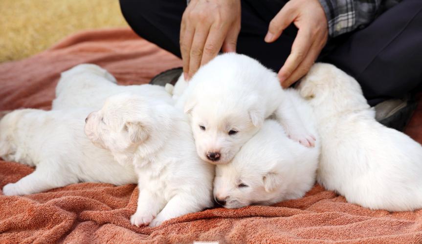 文在寅在推特上分享愛犬照。取自推特