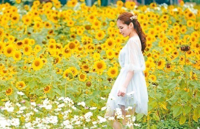 「2018桃園花彩節」以文學詩篇為主題,即日起在大溪、楊梅等七大展區盛大展開。 ...