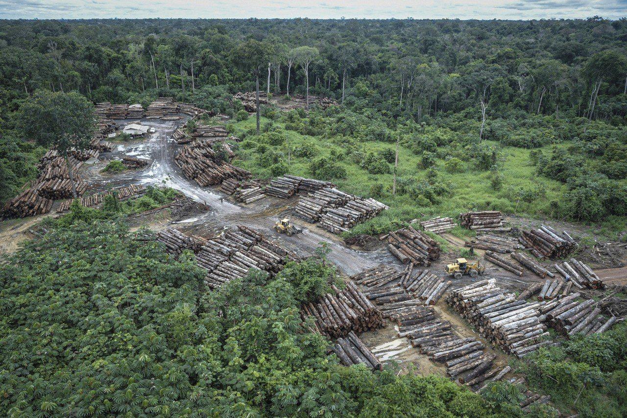 綠色和平組織表示,巴西森林砍伐已經達到極其嚴重的地步,僅僅一年間流失面積等同10...