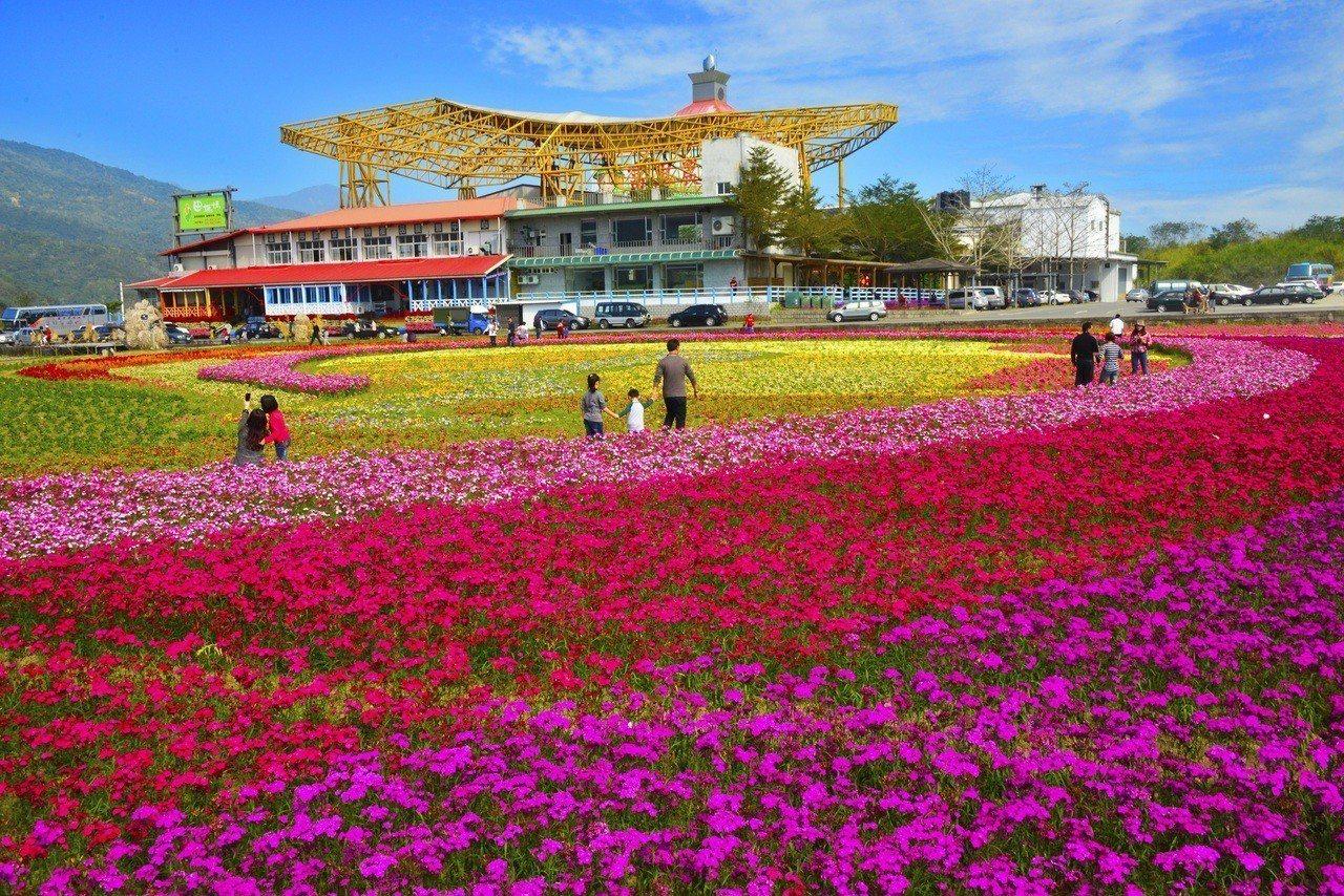 從1月到春節農曆年間,就是花東花海開始盛開的季節。圖/縱管處提供