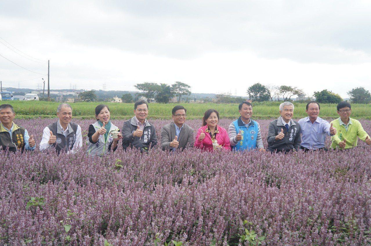 紫色的仙草花是賞花、拍照美景。圖/楊梅區公所提供
