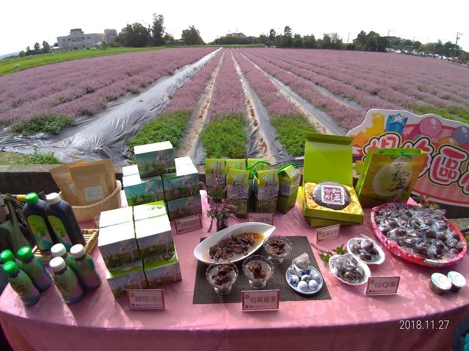 楊梅花彩節今年可以看見大面積仙草花和相關農特產品。圖/楊梅區農會提供