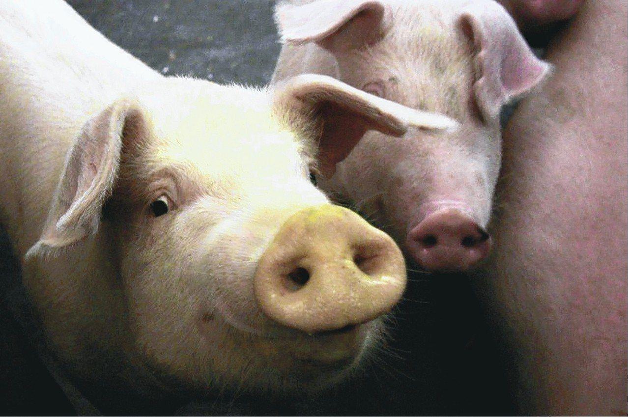大陸非洲豬瘟蔓延,防檢局人員會同海關人員加強查緝,全力防杜非洲豬瘟入侵台灣。 歐...