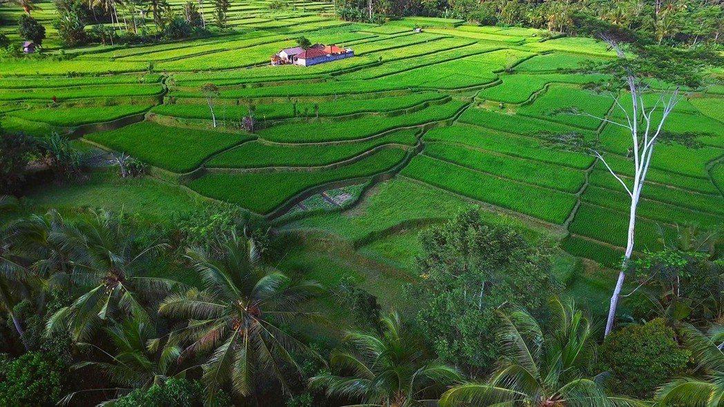 農村的遠見印尼峇里島。圖/公共電視提供