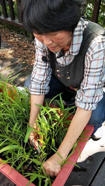 園藝治療師黃盛瑩視植物為夥伴,也是最好的醫生。圖/黃盛瑩提供