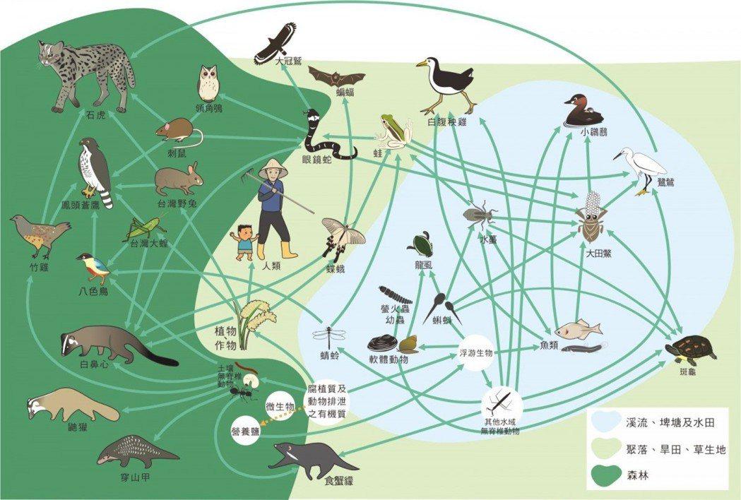 人類棲地與許多淺山物種重疊,友善耕作能幫助生態平衡。 圖/觀察家提供