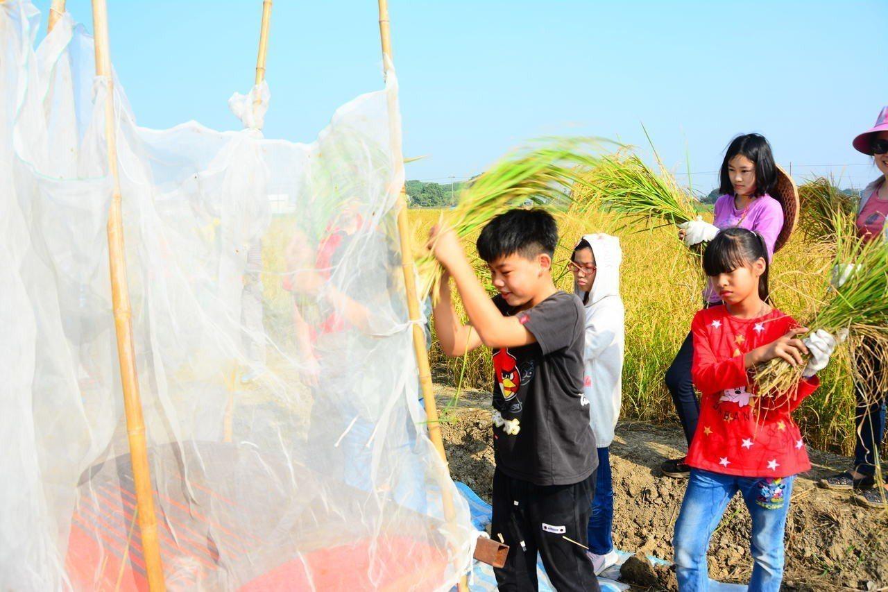 台南市後壁區新東國小今天舉辦校慶米收割,學生體驗敲打脫米。記者吳淑玲/攝影