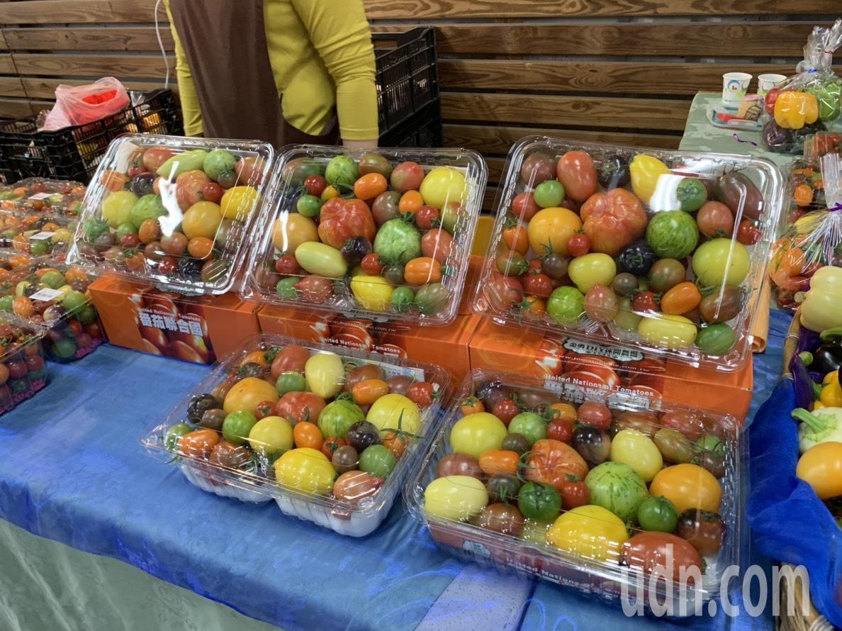 關西鎮每年12月番茄、草莓、柑橘都進入了採收期。記者陳斯穎/攝影