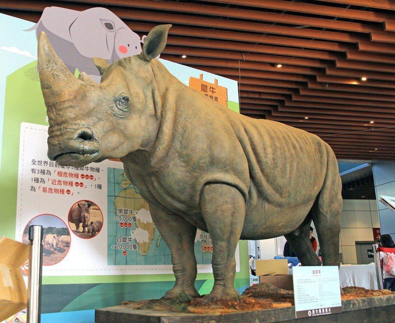 「2018六福綠色永續市集」展示難得一見的犀牛、石虎、穿山甲等實體動物標本。圖/...