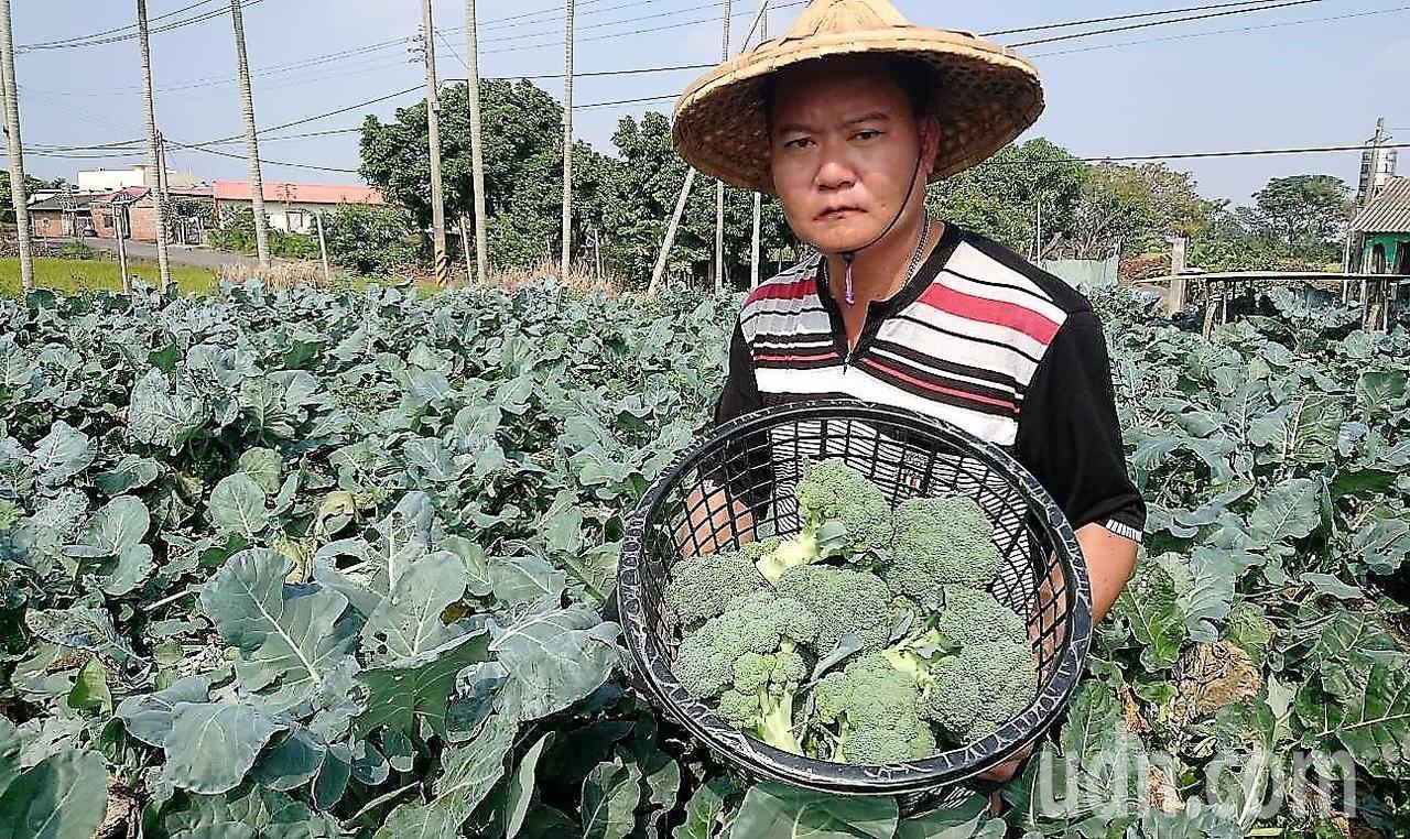 嘉義縣農民王重葦今年823水患後,聽政府的話改種青花菜,沒想到最近收成青花菜價一...