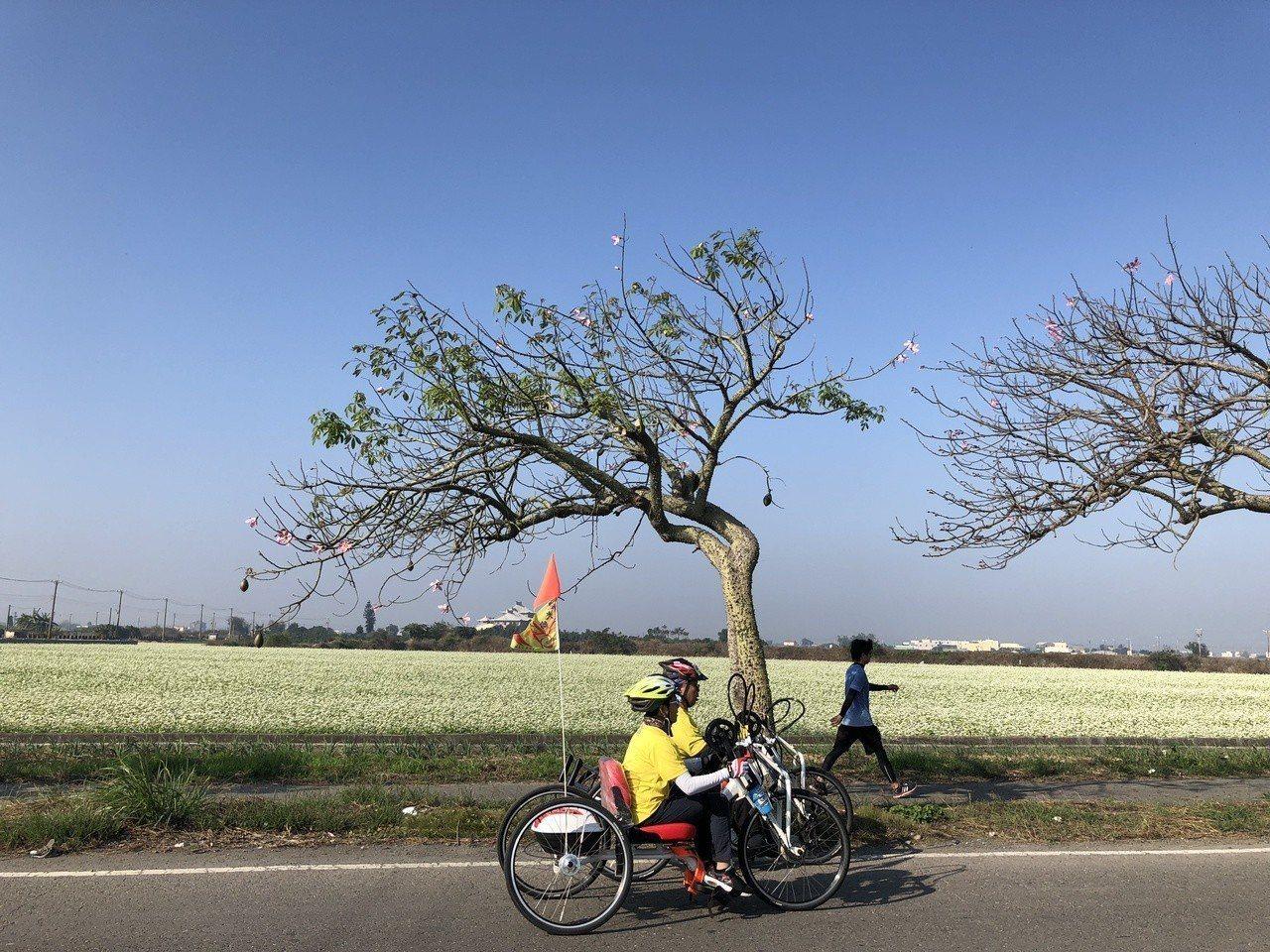 二林蕎麥花海公益路跑有蕎麥田美景陪跑。記者林敬家/攝影