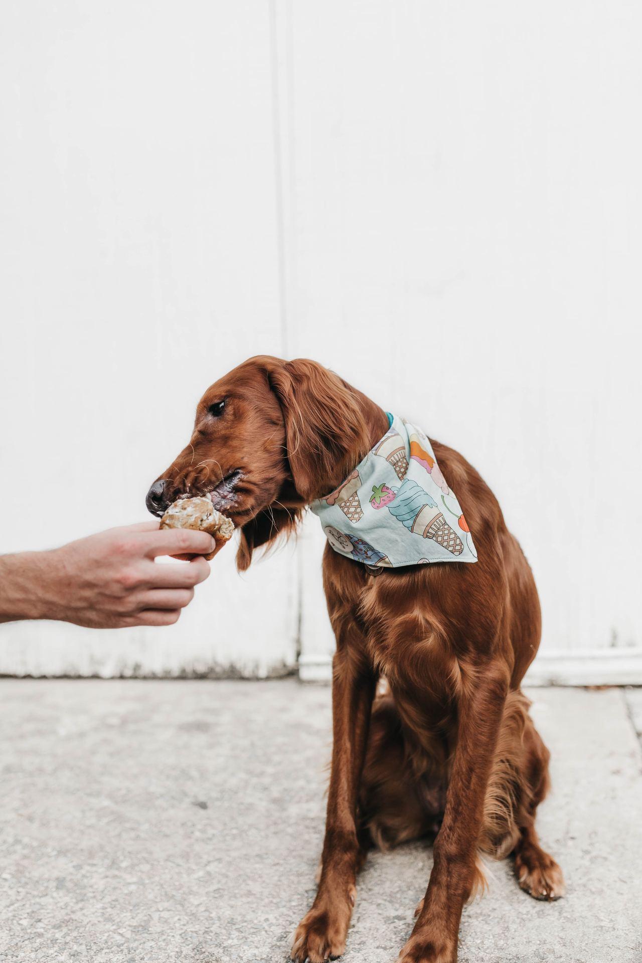 飼主戒掉餵食零食、人食,才能幫助寵物建立正常的飲食習慣。圖/美國寵物食品協會提供