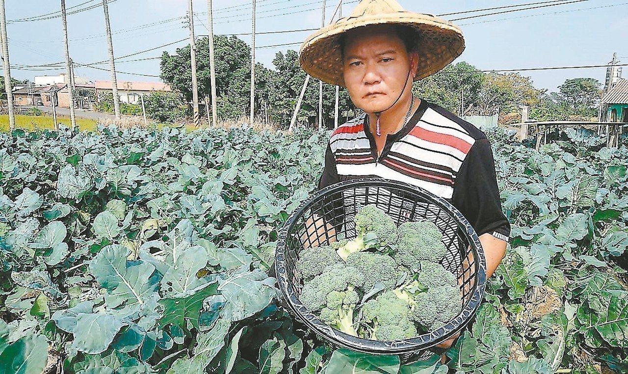 農民王重葦說,今年823水患後,聽政府的話不種高麗菜、改種青花菜,沒想到最近收成...