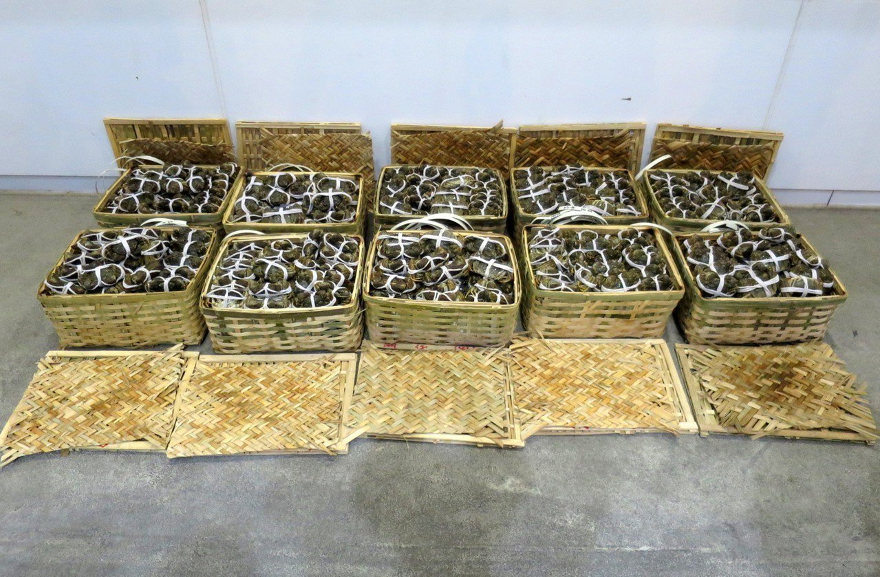 香港查獲624隻走私大閘蟹。 香港中國通訊社