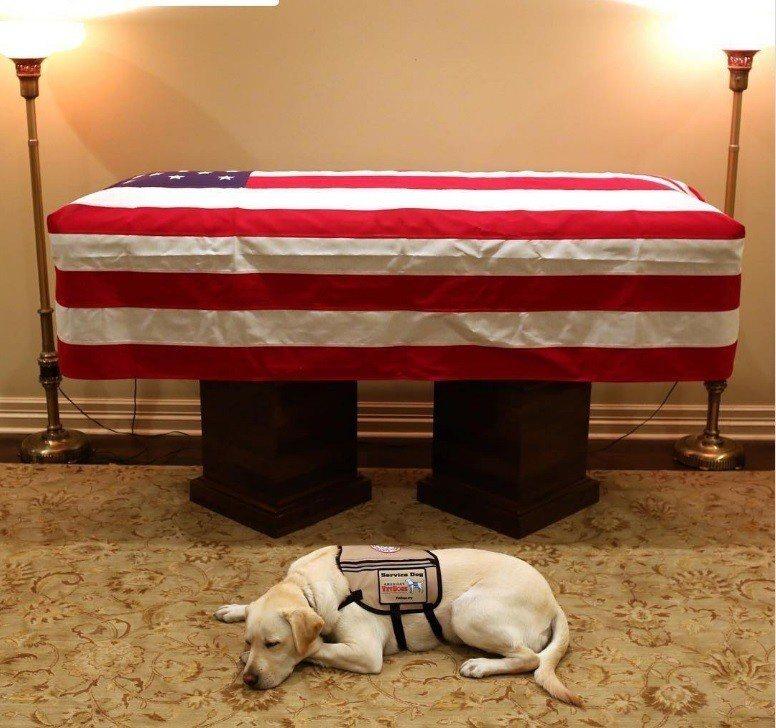 老布希忠狗,伴最後一程。 美聯社
