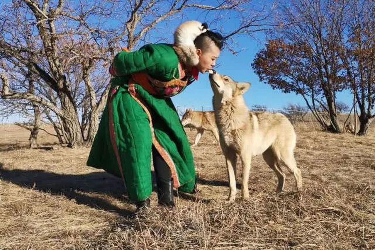 內蒙古一位20歲的姑娘周鑫月,不僅養了八匹狼,還用嘴叼生肉餵狼,把三個前男友都被...