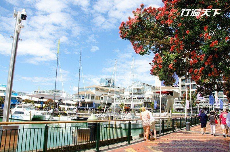 在城市裡頭逐漸轉紅的波胡圖卡瓦樹,也是紐西蘭人俗稱的耶誕樹,這種顯耀著艷紅色的樹...