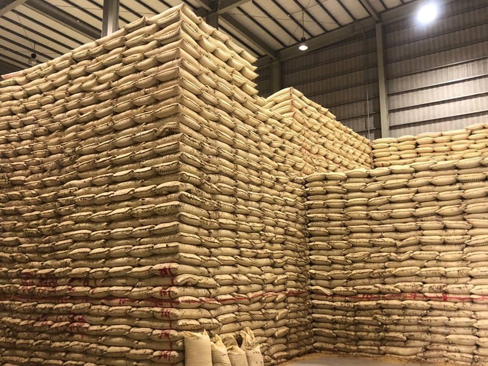今年產量太豐,公糧倉儲大爆滿。圖/農會提供