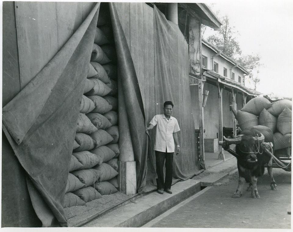早年台灣為了堆放大量稻穀,設置的克難野積倉。圖/財團法人台北糧食協進會提供