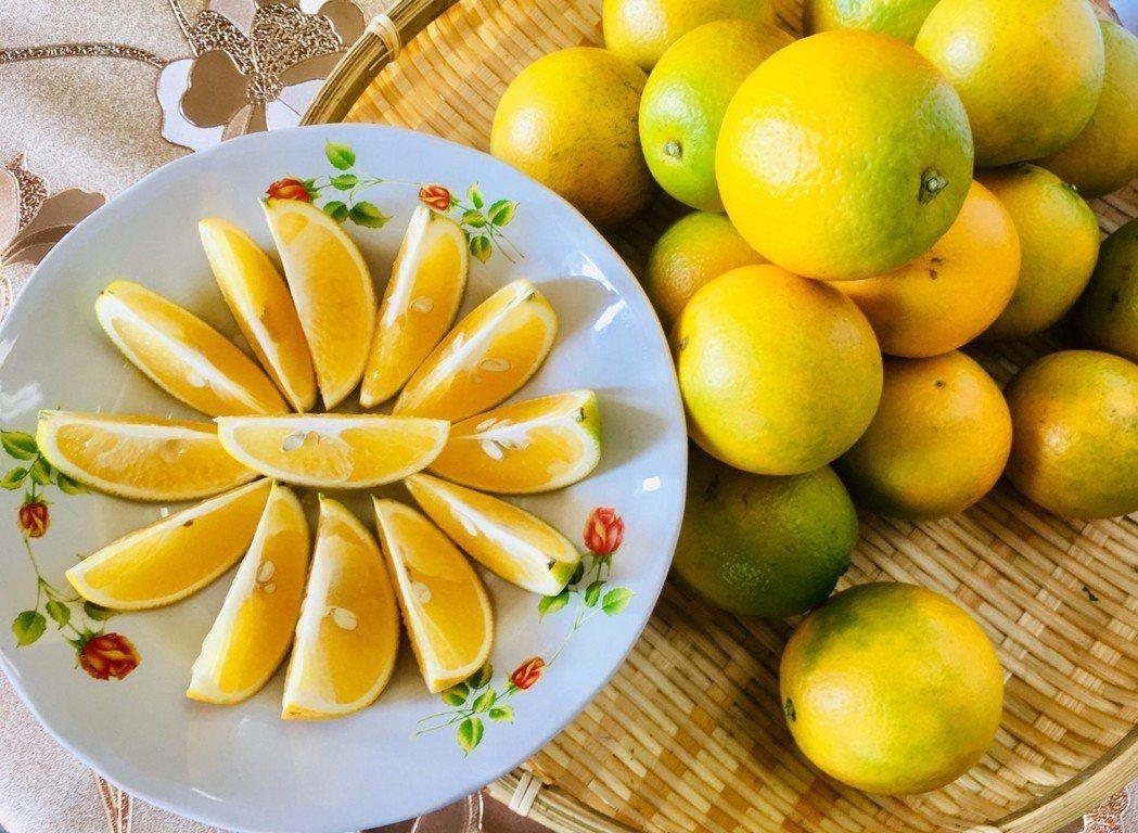 雲林縣柳丁進入盛產季節,今年柳丁品質不受氣候影響,甜度高、甜酸比適中,口感清爽、...