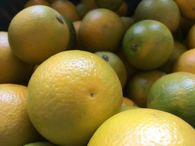 柳丁進入盛產季節,現在品嘗正是時候。 聯合報系資料照 記者陳雅玲/攝影