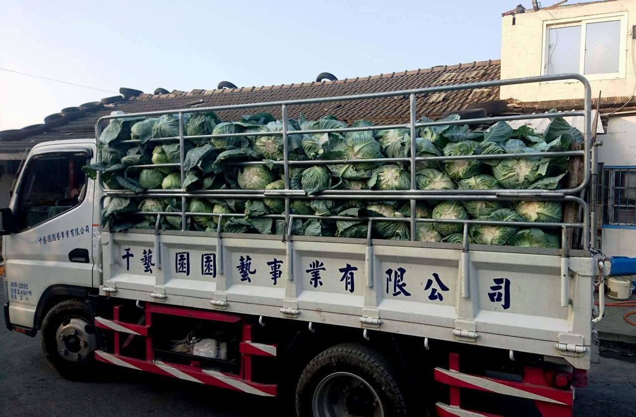 台中市千藝園藝公司向青農洪寶評採購1500箱,還自己開貨車到產地載回公司。記者何...