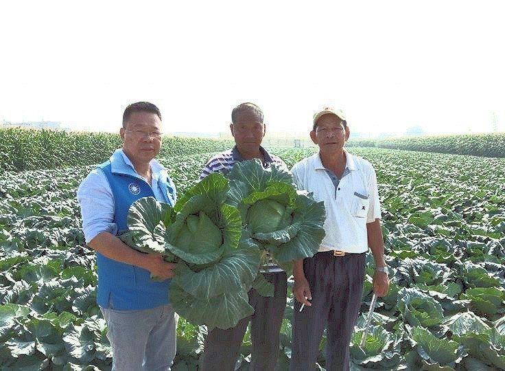 高麗菜價跌,台南市議員蔡育輝(左一)收購高麗菜義賣所得將全部捐給北台南家扶中心。...