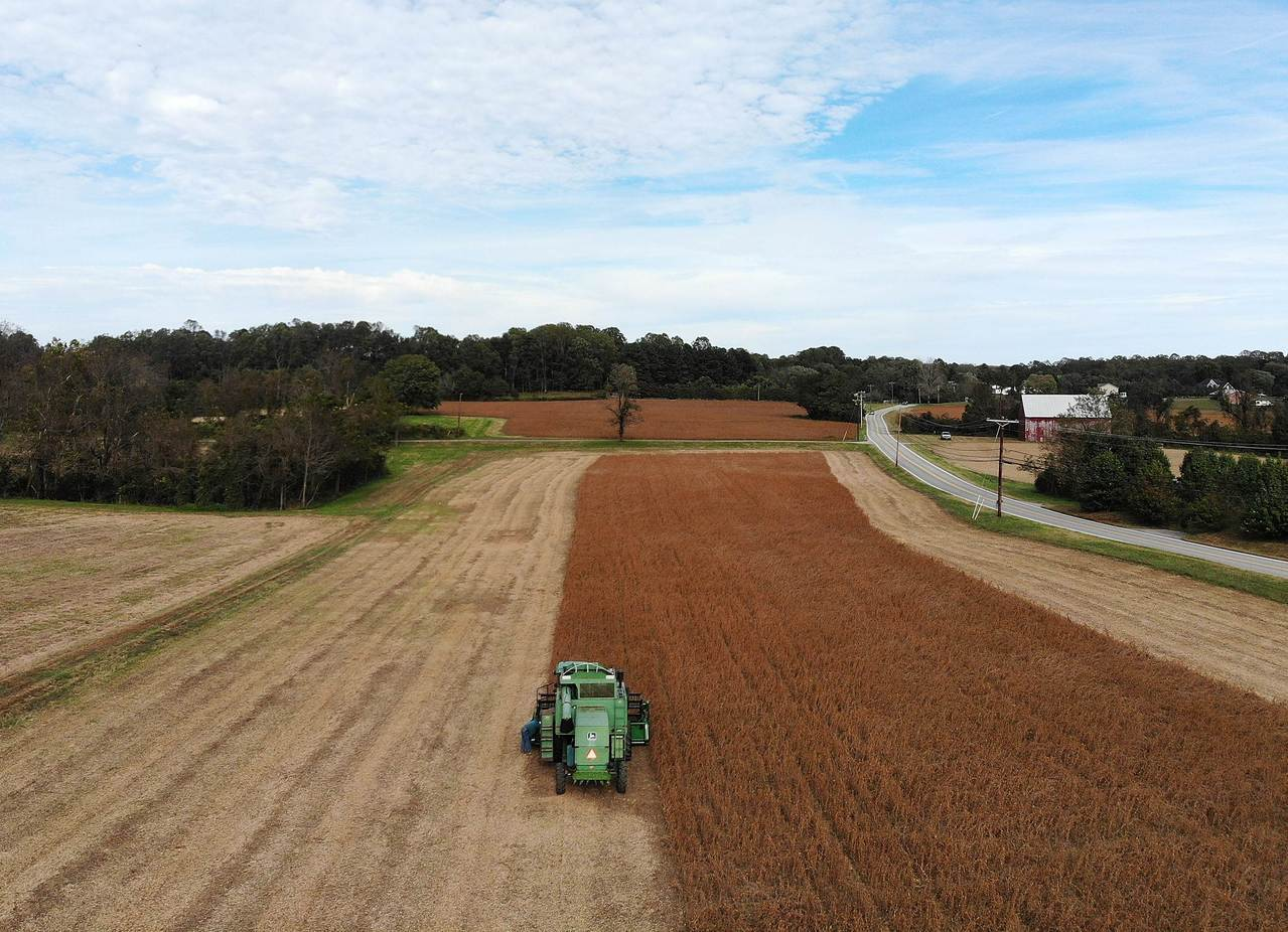 美國大豆收成場景,並非本文所述堪薩斯州大豆田。法新社