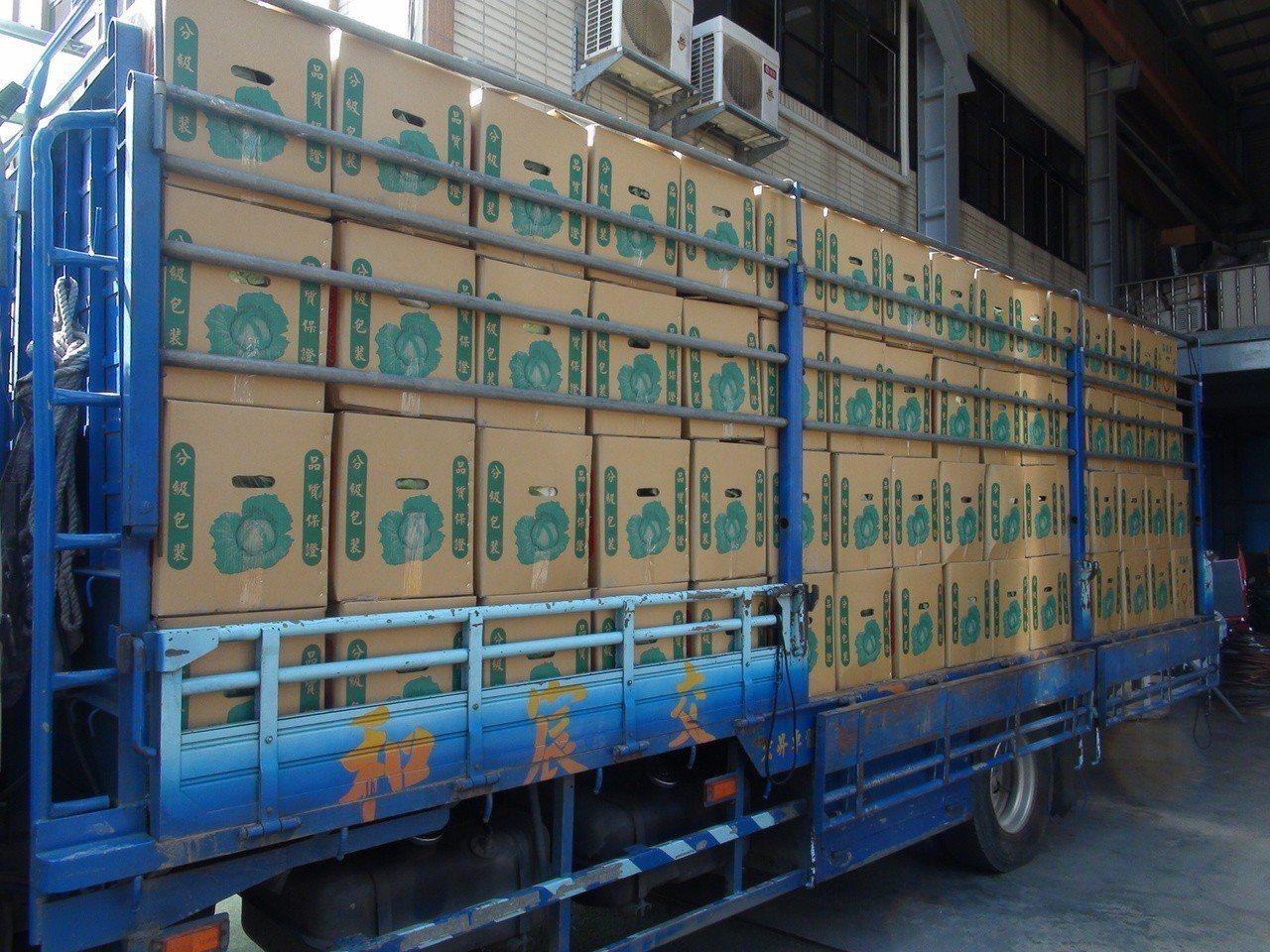 台中市議員吳顯森向雲林西螺農民認購300箱高麗菜,免費供民眾索取。記者余采瀅/攝...