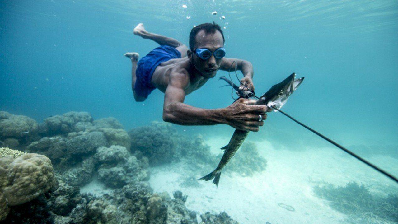 巴瑤族是世上最後一支海洋遊牧民族,近期研究發現,他們可以輕鬆在水中待上5分鐘,有...