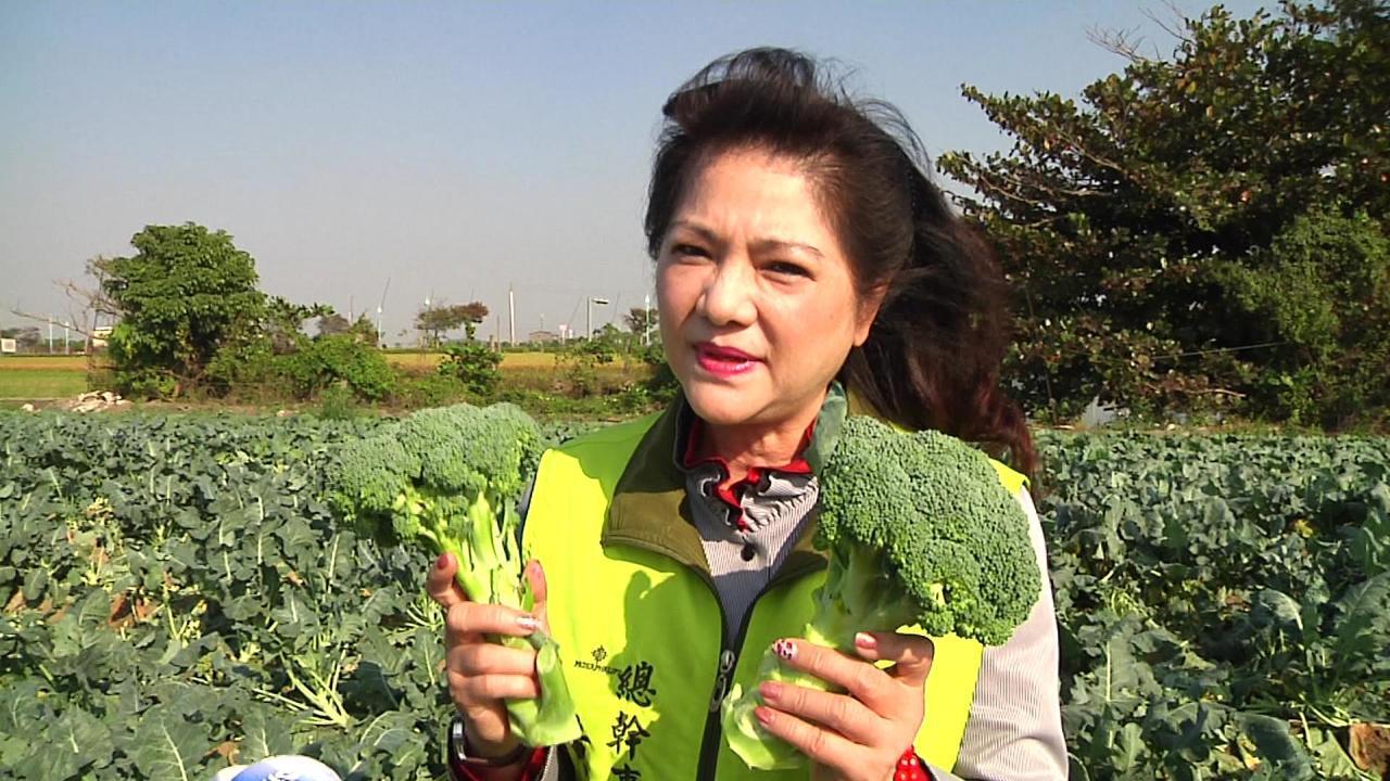 太保市農會總幹事黃麗貞表示,中央應管控菜苗數量、種植面積、增加外銷通路,建立更多...