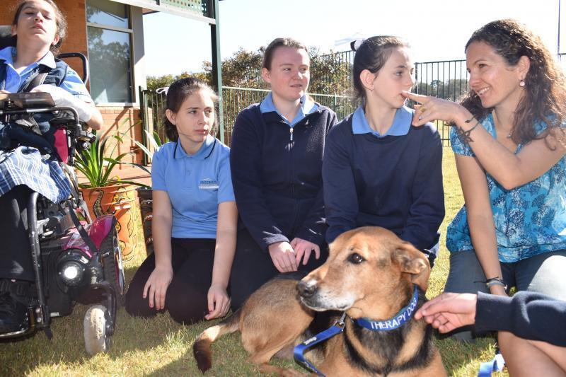 目前共有3隻治療犬進入校園,每周一、三固定時間「出診」。圖/翻攝schoolsp...