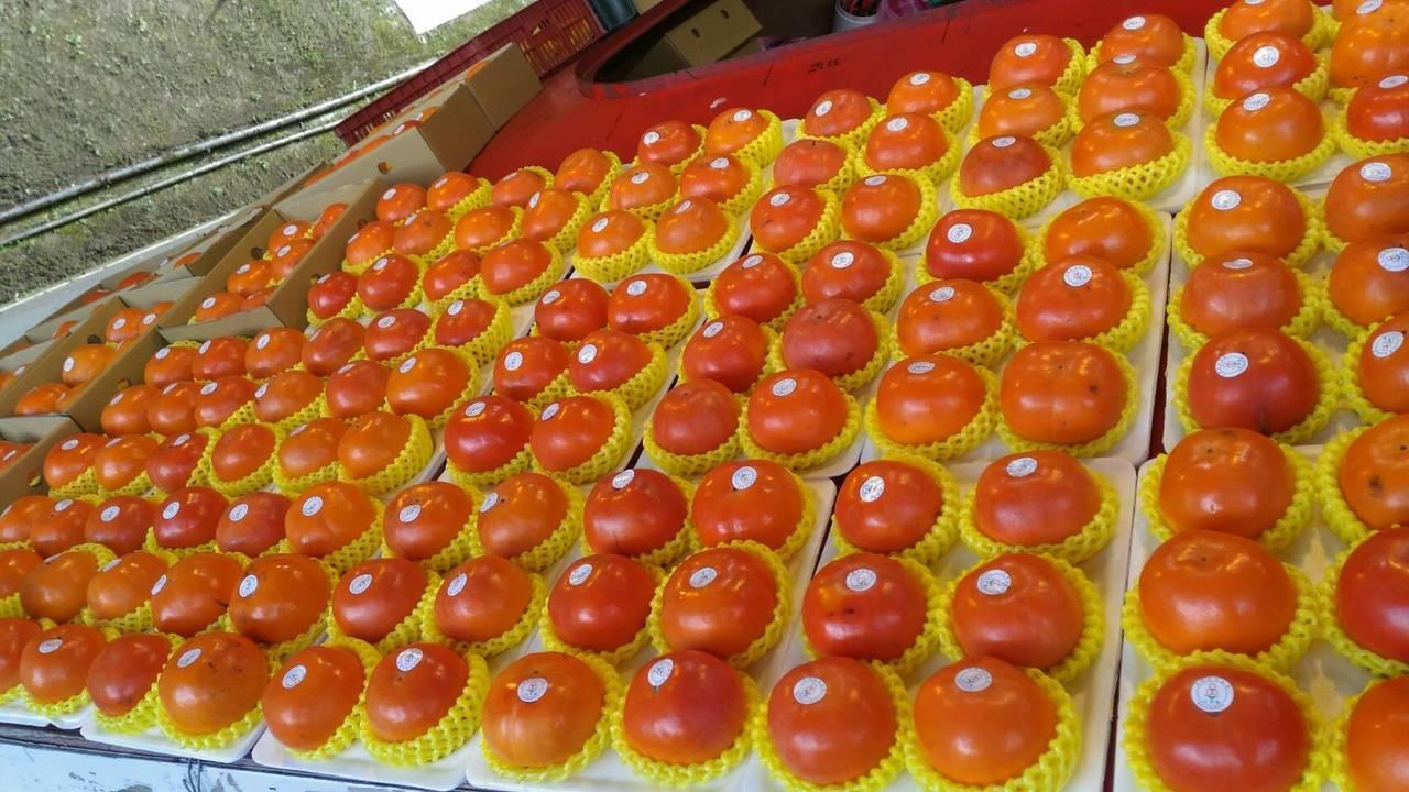 甜柿今年價格低迷,一盒甜柿才賣300元。圖/農民提供