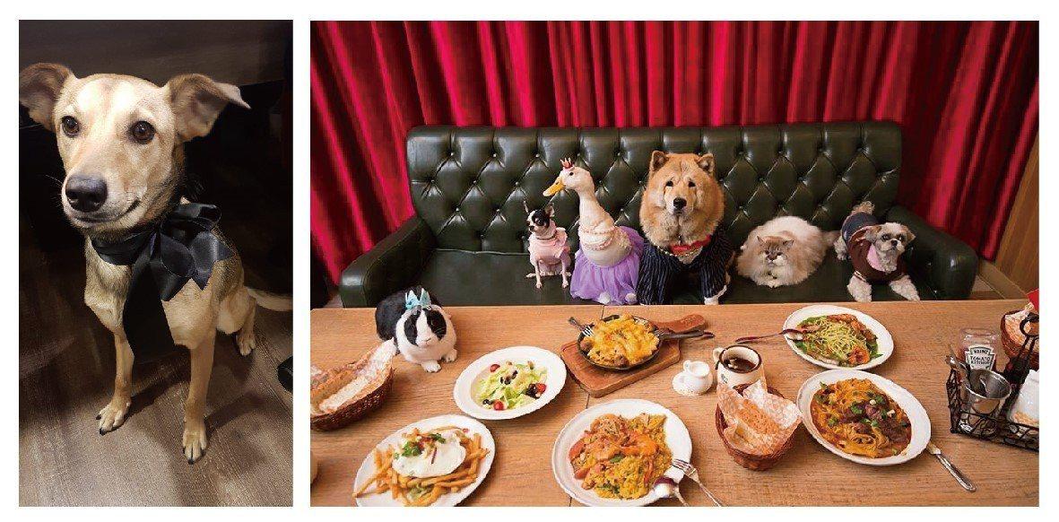 在貳樓黃董事長和員工的愛護下,小花成了一隻幸福的狗狗。(圖/貳樓餐廳提供);在對...