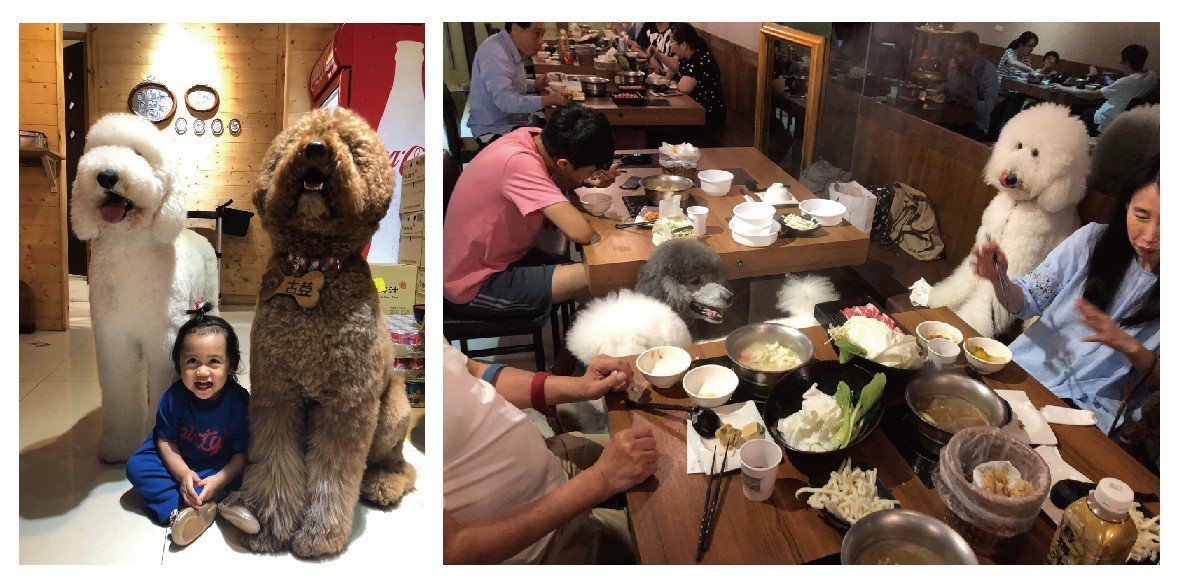大毛屋涮涮鍋的古荳總是在店內熱情的招呼客人;在大毛屋總是能感受到大人與毛小孩一同...