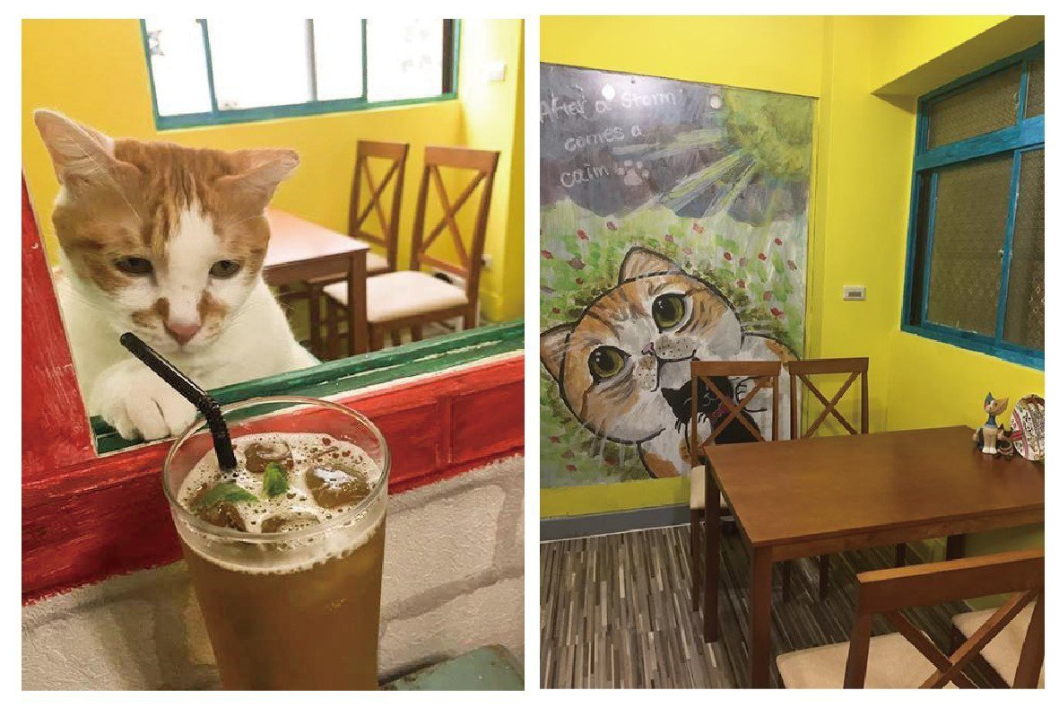 店內牆上都是老闆娘親手繪製的可愛貓咪;貓咪癡癡望著飲料的模樣真是療癒人心!(圖/...