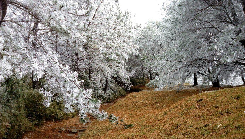 玉山塔塔加園區。 圖片來源/玉管處
