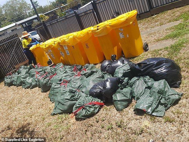 當局已派人清理,舒洛兒的庭院放置著一桶桶數以千計的蝙蝠屍體,數量相當可觀。圖擷自...