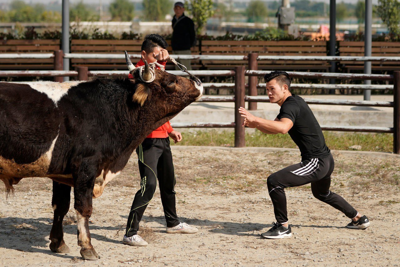 嘉興回族人韓海華,被譽為是中國式鬥牛第一人,也是結合功夫與「嘉興摜牛」,將「嘉興...
