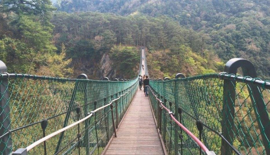 南投縣仁愛鄉「奧萬大吊橋」9年前啟用,橋面距溪床約90公尺,等同30層樓高,可算...