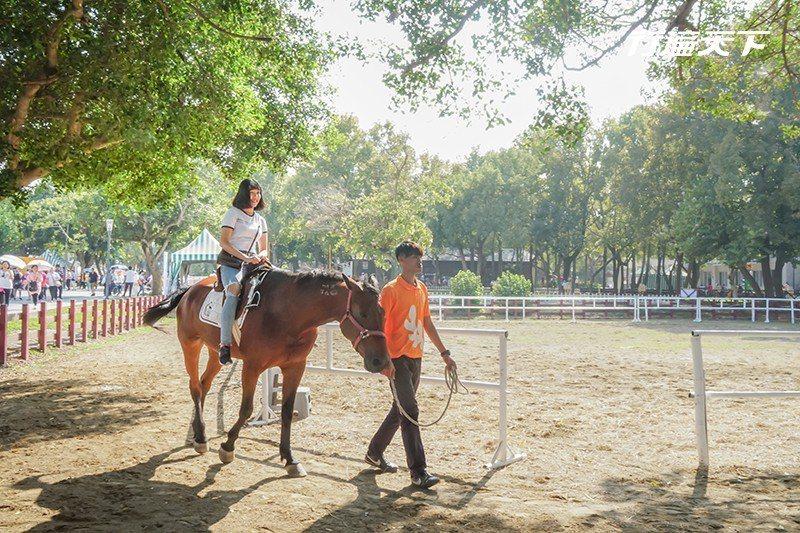 馬場園區內近距離與馬接觸。  攝影|行遍天下