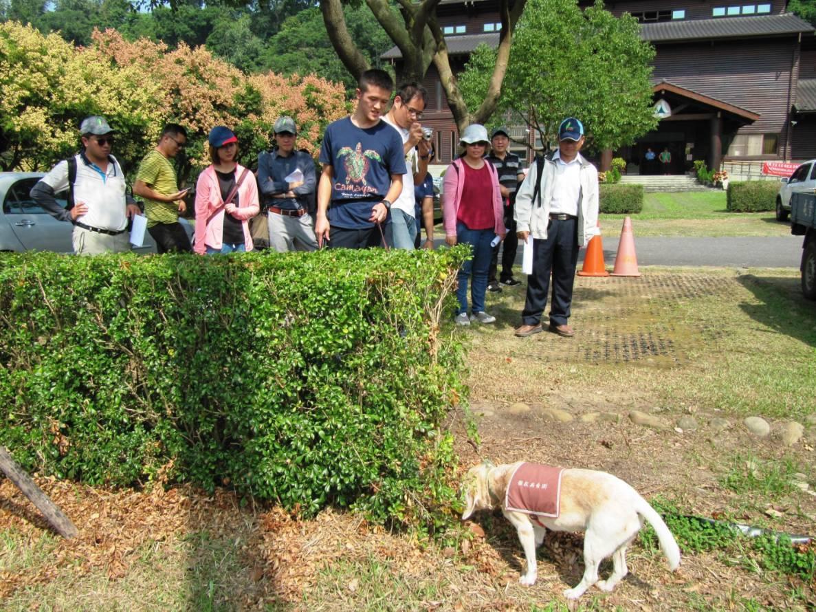 狗醫生聞到疑有褐根菌異味樹木會坐下,林管處即採樣送實驗室檢驗。 圖/嘉義林管...