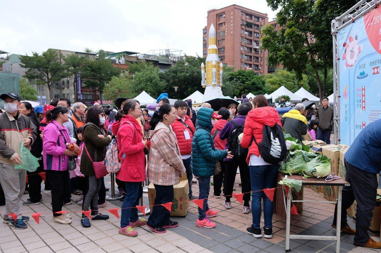 新北市政府準備500顆高麗菜免費發送給民眾,短短18分鐘就發完。記者張曼蘋/攝影