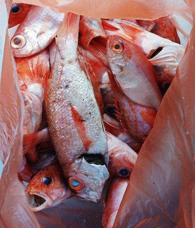 在漁村經常獲贈一袋現撈仔。圖/鄭雅嬬提供