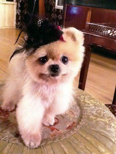 陳文茜的毛小孩小甜點。圖/時報出版提供