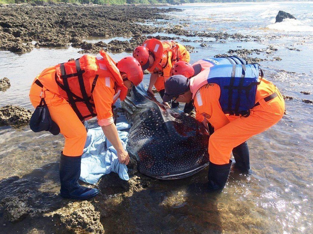 豆腐鯊已擱淺死亡多天,將直接就地掩埋。記者蔣繼平/翻攝
